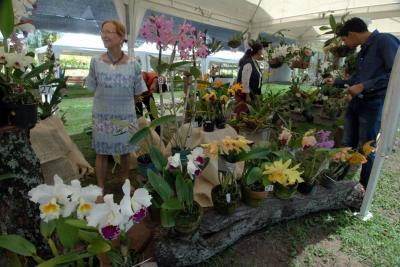 Las orquídeas que engalanan a Bucaramanga