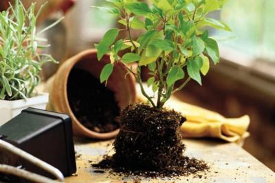 """Plantas que sobrevivirán a su """"mala mano"""""""