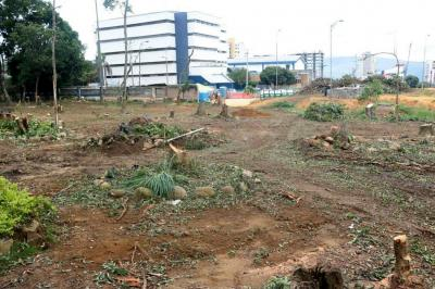 Imágenes de la tala de más 90 árboles de la Escuela Normal de Bucaramanga