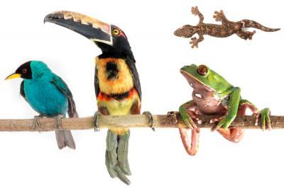 Expedición por Santander registró estas espectaculares imágenes de la flora y fauna