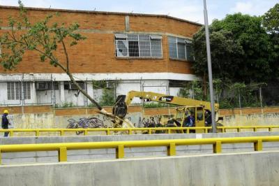 Así fue el traslado de un árbol de la Escuela Normal de Bucaramanga a su nuevo hogar