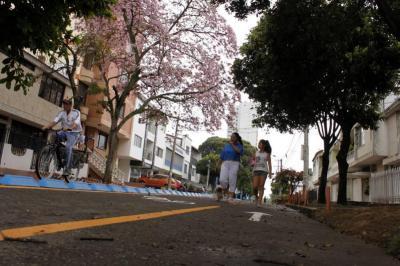 Cerca de 300 mil guayacanes florecen en el área metropolitana de Bucaramanga para adornar sus calles. Estos árboles que alcanzan los 12 metros de altura enla ciudad son el hábitat de muchas aves y materia prima para múltiples artesanías.