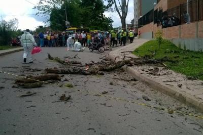 Video registró cuando rama de árbol cae sobre motociclista