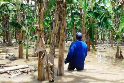 Video registró inundación de 100 hectáreas de cultivos en Santander