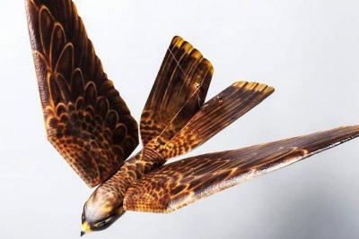 Esta es el ave robot con la que ahuyentarían a gallinazos en El Carrasco de Bucaramanga