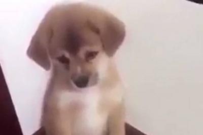 La enternecedora reacción de este cachorro al regaño de su dueño