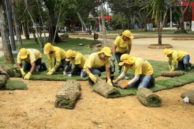 Césped japonés: ¿Solución para el deterioro de los parques de Bucaramanga?