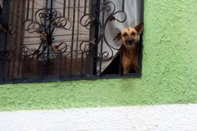 Rescatan dos perros que sobrevivieron 5 meses abandonados en vivienda de Girón