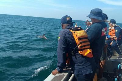 Así fue el rescate de un delfín en aguas de Santa Marta
