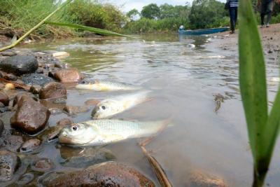 Imágenes de la grave contaminación ambiental por crudo en Santander