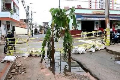 Habitantes de Floridablanca sembraron matas de plátano en huecos sin tapar