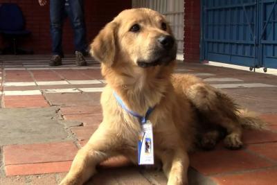 Lukas, el perro asistente de portería en un colegio de Floridablanca