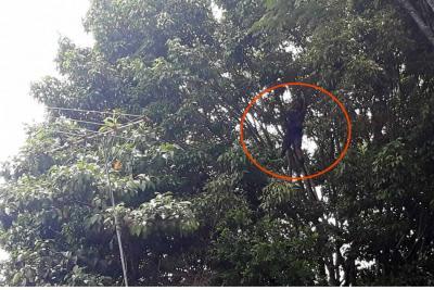 Más de 26 horas permanece estudiante de la UIS aferrado a un árbol en la Escuela Normal de Bucaramanga