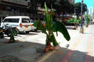 Con matas de plátano ciudadanos exigen arreglos en malla vial de Bucaramanga
