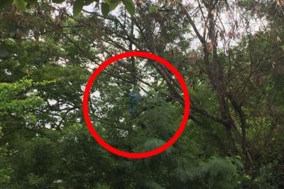 Jóvenes se aferran a un árbol para evitar construcción de proyecto de vivienda en Floridablanca