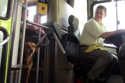 La historia de lealtad de una perra que busca en Metrolínea a su amo que murió