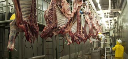 En Santander se tienen dos modernas plantas de sacrificio bovino certificadas para exportación de carne a diversos mercados internacionales.