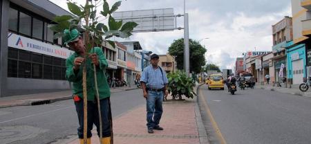 Los árboles que ya fueron compensados del Tercer Carril también se sembraron en el norte y a lo largo de la calle 45.