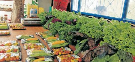 En el lugar se cultivan de forma orgánica productos como brócoli, cilantro, lechuga, cebolla, cebollín, pimentón, zucchini y una gran variedad de tomate cherry, entre otros.